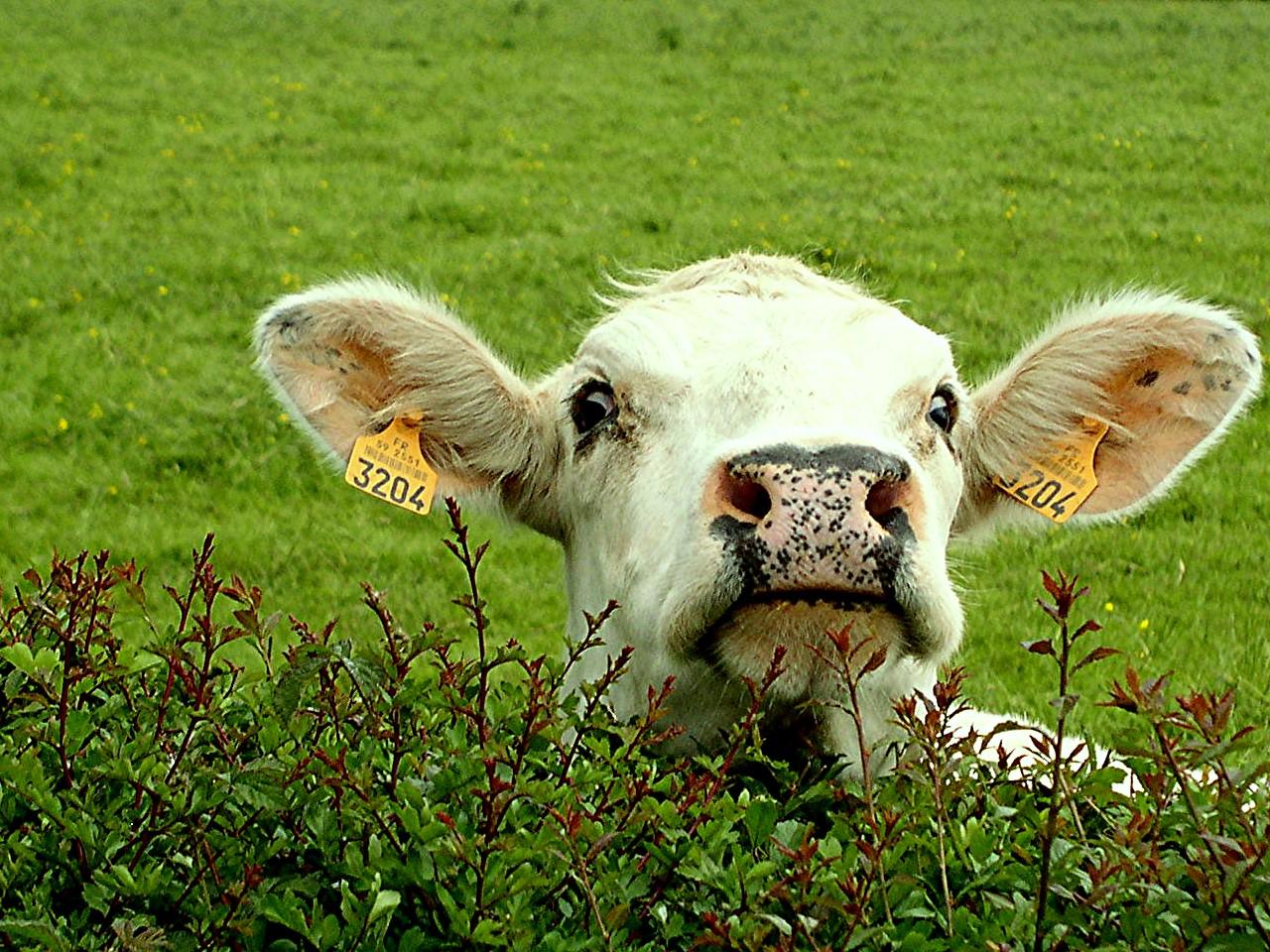 Image d 39 animaux de la ferme les belles images d - Images d animaux de la ferme ...