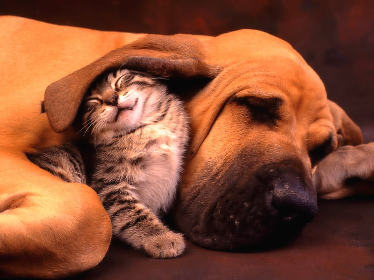 Naturalement Best - Page 3 Images-bebes-animaux%20(30)